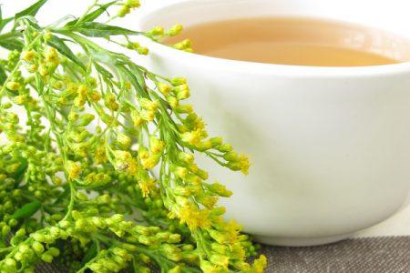 Heilpflanzen bei Harnwegsinfekten