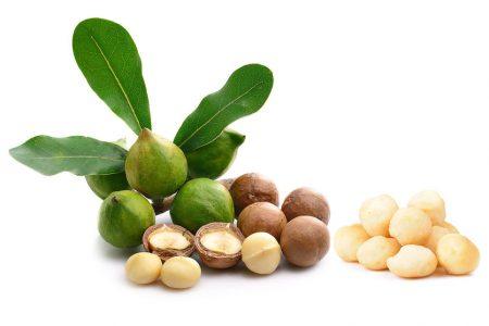 """Macadamia - """"Königin der Nüsse"""""""